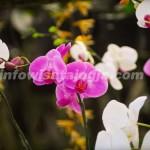 Wisata Taman Anggrek Merapi